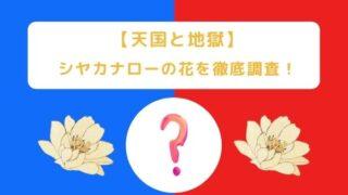 【天国と地獄】シヤカナローの花は奄美の植物!?架空の花である理由は?